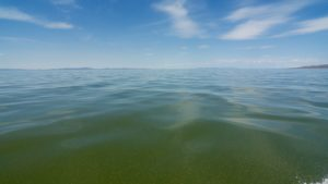 Water Skin