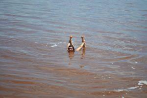 Lake Stretch